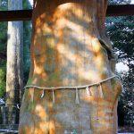 手野の大杉 国造神社