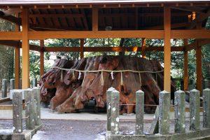 手野の大杉 根っこ部分 国造神社