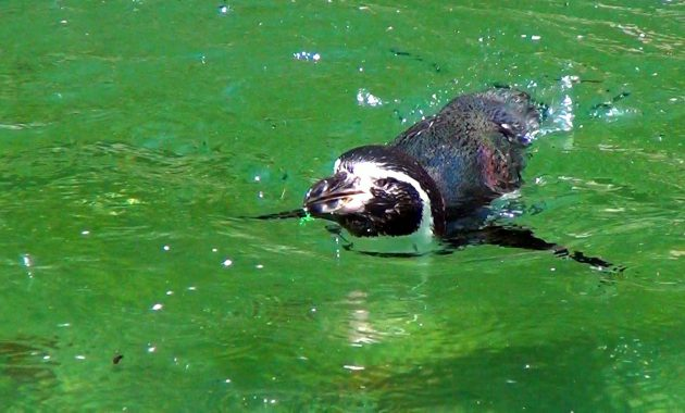 ペンギン Penguin 阿蘇カドリー・ドミニオン