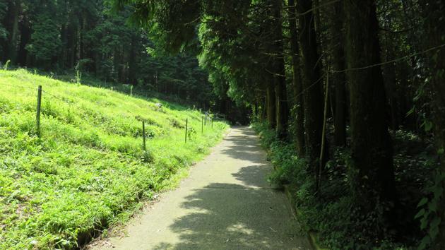 古閑の滝ジオサイトへの林道