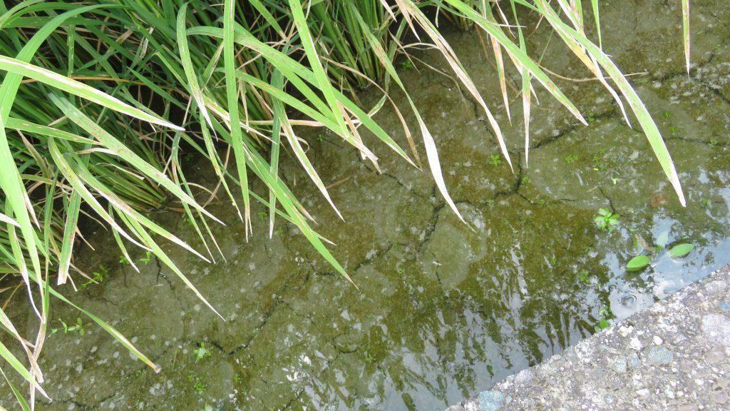 阿蘇谷湧泉群ジオサイト「宮地・役犬原地区湧水群」灌漑用水IMG_4758