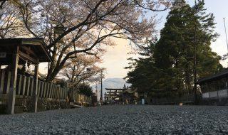 桜満開の参道