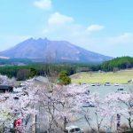 月廻り公園の桜と阿蘇山 根子岳
