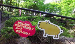 カピバラの池 阿蘇カドリー・ドミニオン 20170507 Pond of Capybara Aso Cuddly Dominion