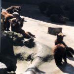 リアルなヒグマの鳴き声 阿蘇カドリードミニオン(旧・くま牧場)の動画を掲載